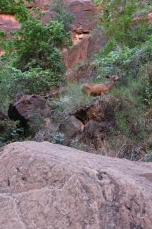 Zion National Park - River Walk Trail